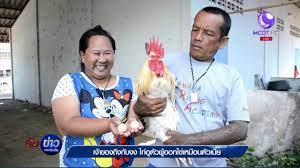 เจ้าของถึงกับงง ไก่โต้งตัวผู้ออกไข่เหมือนตัวเมีย - YouTube