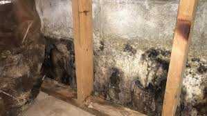 mold removal pittsburgh. Modren Mold How To Clean Mold Mistakes Avoid With Mold Removal Pittsburgh E