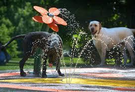 splash pads during the summer dog park