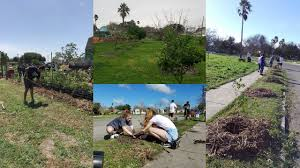 the learning garden at tom graham park grow local south texas