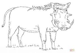 Warthog coloring page   Free Printable Coloring Pages