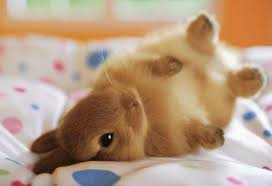 super cute baby bunnies. Brilliant Cute 16 Of With Super Cute Baby Bunnies M