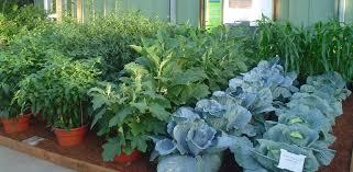 Easy Container Garden Plans For The Home GardenerContainer Garden Plans