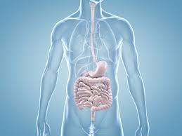 Magen : Ursachen Behandlung - DoktorDarm
