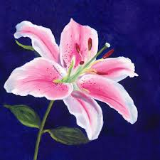 images stargazer lily portrait of a stargazer lily art of giving