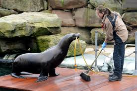 zookeeper cleaning. Plain Zookeeper Chessington World Of Adventures Reopens For 2014 With New Rides And  Adorable Animals  London Evening Standard For Zookeeper Cleaning