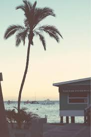 palm trees tumblr vertical. 510814 + Reblog Palm Trees Tumblr Vertical E