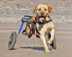 rear support dog wheelchairs pet