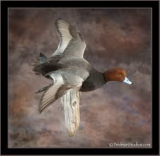 Best way to mount redhead duck