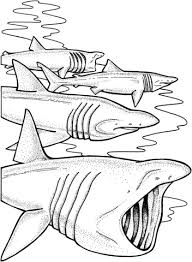 Small Picture Sharks Coloring Pages Coloring Coloring Pages