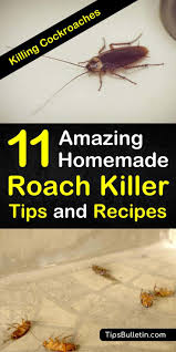 Killing Cockroaches 11 Amazing Homemade Roach Killer Tips And Recipes