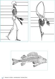 Walvissen En Dolfijnen Activiteitenboekje Educatieve Dienst Pdf