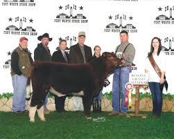 4j Family Cattle Fullblood Maine Anjou