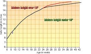 Sheltie Size Shelties Growth Chart Sheltie Diagram