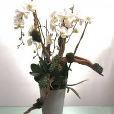 heard it through the gvine orchids