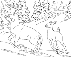 Detailed Animal Coloring Pages Getcoloringpagescom