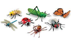 """Résultat de recherche d'images pour """"insectes"""""""