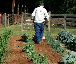 controlling weeds by cultivating