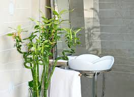 bamboo-small bathroom
