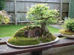 11 bonsai hobbit hole bought bonsai tree