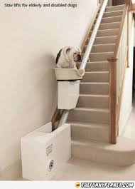 10 best Stair Lifts arent just for elderly images on Pinterest