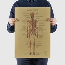 Human Skeleton Wall Chart The Skeletal System Human Body Anatomy Huge Scientific Wall