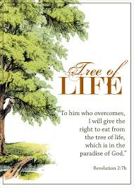 Tree Of Life Quotes Gorgeous Download Tree Of Life Quote Ryancowan Quotes