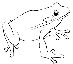 Small Picture Frog Coloring Pages All Coloring Pages