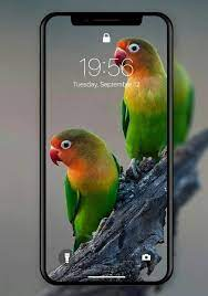 Lovebird Wallpapers for Android - APK ...