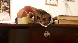 Когда сел делать курсовую по деталям машин Когда сел делать курсовую по деталям машин кот не успех Курсовая