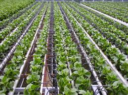 Increasing Crop Production By Using Drip Irrigation System Ground
