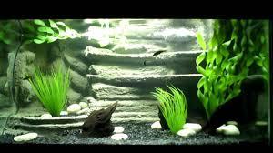 Aquarium Backgrounds 3d Aquarium Background Youtube