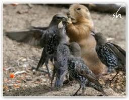 Конкуренция взаимоотношения отрицательного типа урок Биология  В общем смысле слово конкуренция означает сталкивание соперничество соревнование Конкуренция чрезвычайно широко распространена в природе