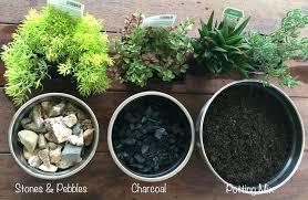 mini garden indoor miniature terrarium fairy garden raw materials required to make an mini indoor herb mini garden indoor