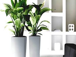 best low light office plants. Affordable Best Low Light Indoor Plants About Office No Plant Hire Unnamed File L