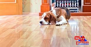 pet friendly flooring laminate australia pet friendly flooring