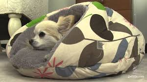 burger bed  small dog bed  youtube