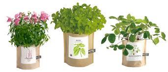 garden in a bag. These Garden In A Bag O