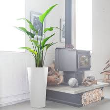 My City <b>Plants</b>: <b>Plant</b> Delivery NYC | Indoor <b>Plant</b> Shop In New York
