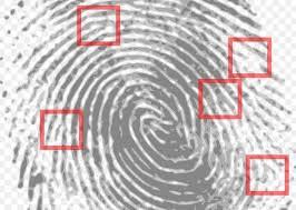 biometric history cave painting criminal profiling and iris biometric history cave painting criminal profiling and iris scanning