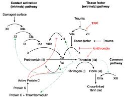 Coagulation Cascade Hematology Medbullets Step 1