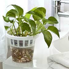 office flower pots. SKU172012-5.jpg Office Flower Pots O