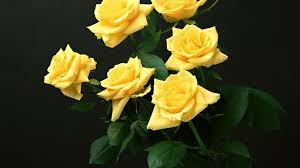 p 12 yellow rose mobile patible 350 68 kb