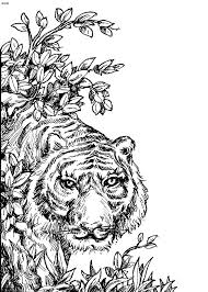 Small Picture Stunning Coloring Pages Tigers Realistic Contemporary New
