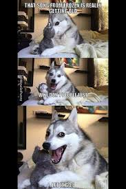 Pun Husky on Pinterest | Pun Dog, Husky Meme and Puns via Relatably.com