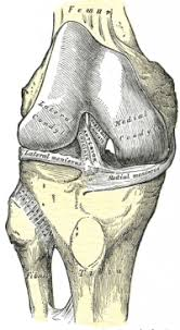 Anterior Cruciate Ligament Acl Injury Physiopedia