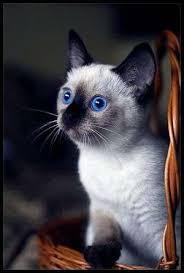 gray tabby kitten names