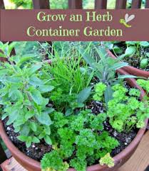 Carolina Charm Thyme For Herbs IIIContainer Herb Garden Plans