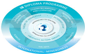 international baccalaureate program south texas business  ib model