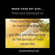Life Continues for Your Pet in the Afterlife…